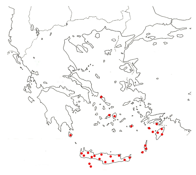 C. pussilum map